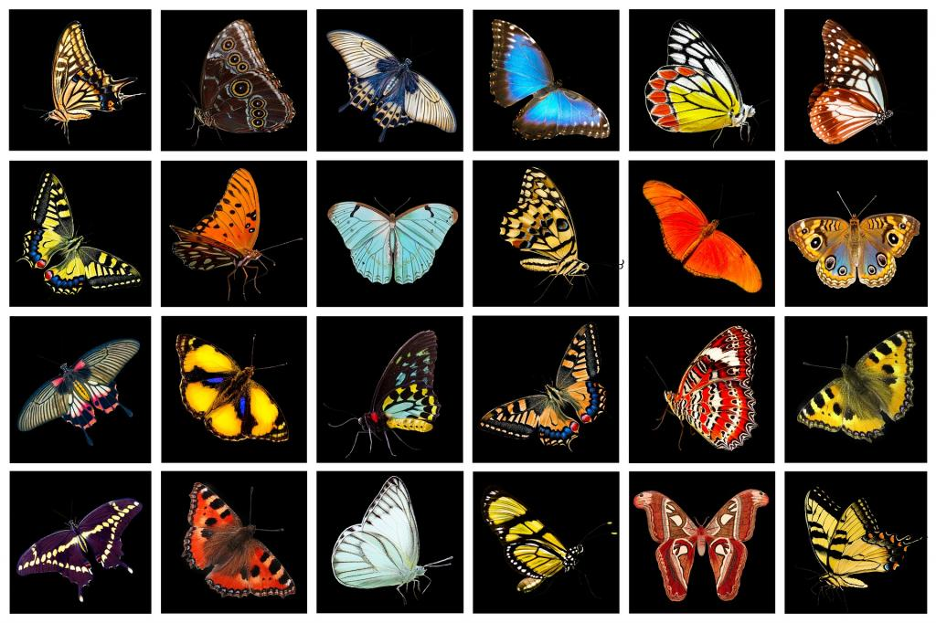 photos of different types of butterflies